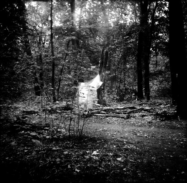 dead_tree_aude_francoise_brent_sqar_33
