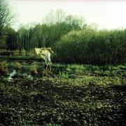 chaperon_auderrose_brentsqar_color_analogue_photography_longexposure_05