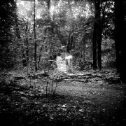 dead_tree_aude_francoise_brent_sqar_30