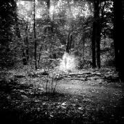 dead_tree_aude_francoise_brent_sqar_31