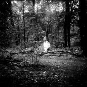dead_tree_aude_francoise_brent_sqar_32