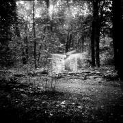 dead_tree_aude_francoise_brent_sqar_34