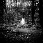 dead_tree_aude_francoise_brent_sqar_35