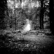 dead_tree_aude_francoise_brent_sqar_36