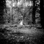 dead_tree_aude_francoise_brent_sqar_38