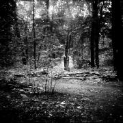 dead_tree_aude_francoise_brent_sqar_39