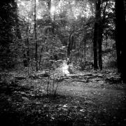 dead_tree_aude_francoise_brent_sqar_40