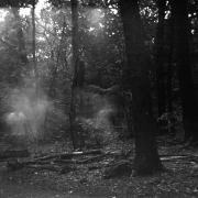 dead_tree_aude_francoise_brent_sqar_43