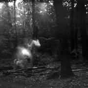 dead_tree_aude_francoise_brent_sqar_44