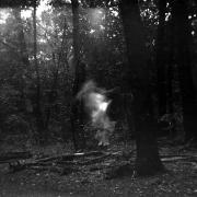 dead_tree_aude_francoise_brent_sqar_45