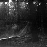 dead_tree_aude_francoise_brent_sqar_47