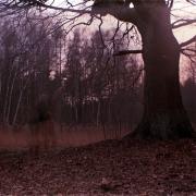 erased_auderrose_brentsqar_pinehole_color_photography_experiments_03