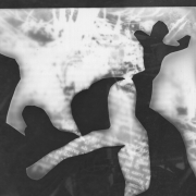 auderrose_old_photogram_06