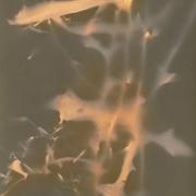 auderrose_plant_traces_06_web
